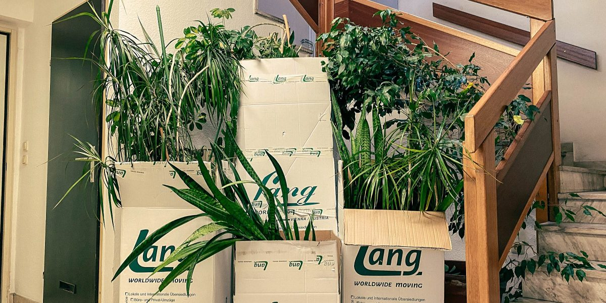 Don't hang your head: This is how the move with plants works out